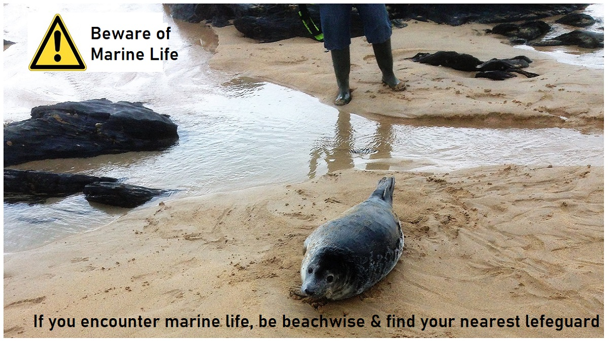 Marine-life-what-to-do-if-washed-up-dead-or-alive-be-WISE
